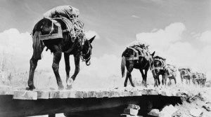 army-horses-mules_01_700